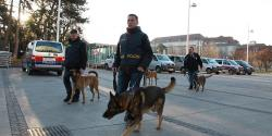 Canine dogs ready for work in Wiener Stadthalle