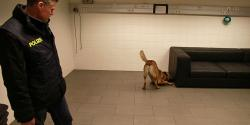 The security has high priority. A canine dog sniffing for objects